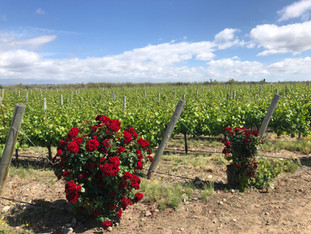 Mendoza | Valle do Uco | visita à Salentein, Andeluna e La Azul