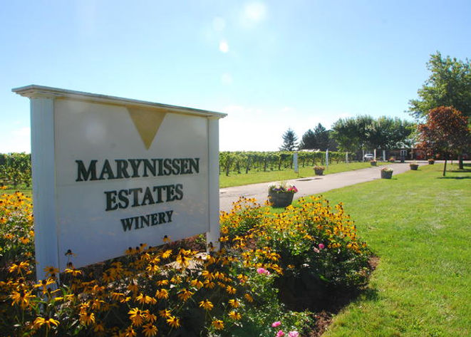 marynissen-estate-winery-tour-and-tastin