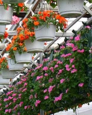Vander Hoeven Greenhouses.webp