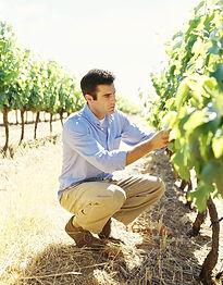 Winemaker_edited.jpg
