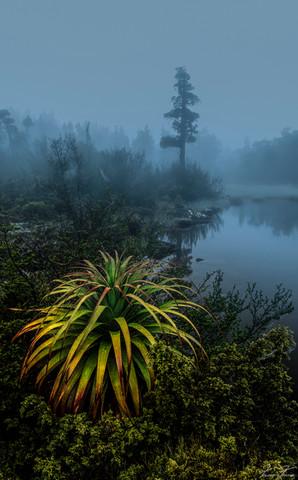 Plants_Poolofmemories.jpg