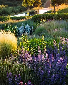 Jardin ecolo1.jpg.webp