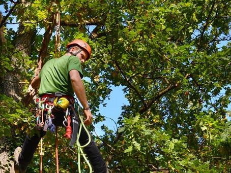La minute Arbo Mundo: conseils pour la taille de vos arbres