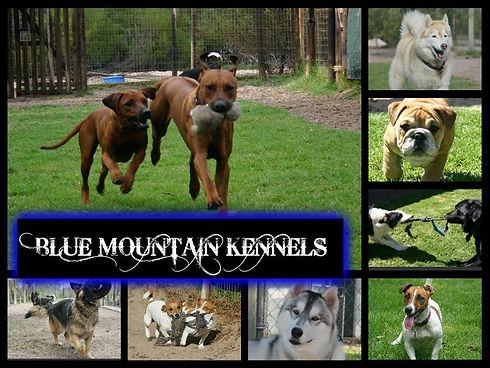 Blue Mountain Kennels.jpg