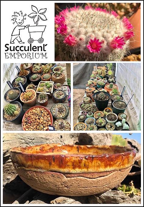 succulent emporium.jpg
