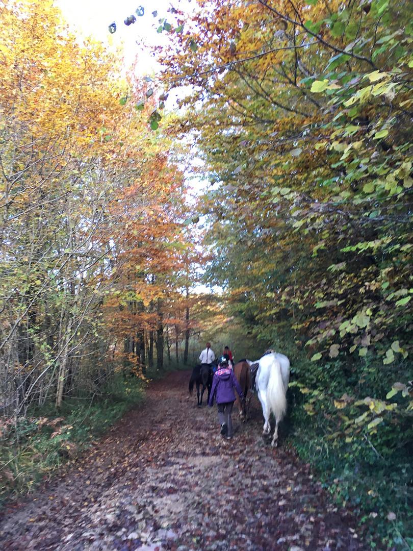 Chemin en automne