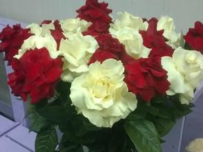 Поступление французской розы