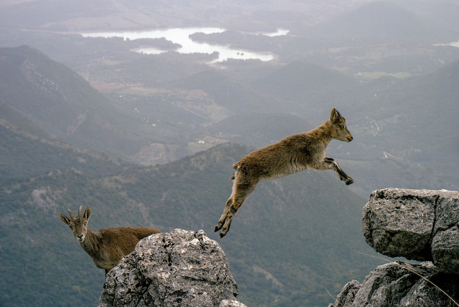 Can I Take a Leap of Faith?