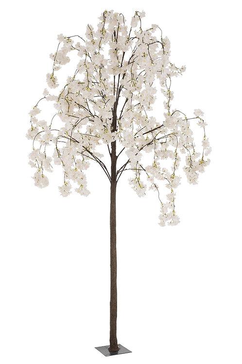 Árvore Branca Alta