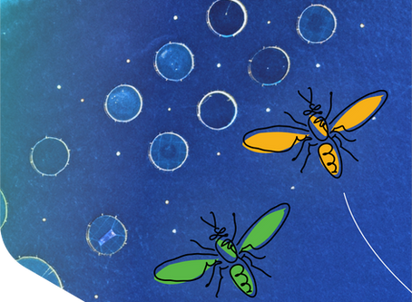 Protenga's new brand identity: Making Insects Work For You