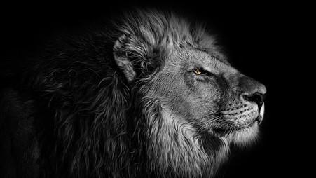 Proteja o seu Rei Interior