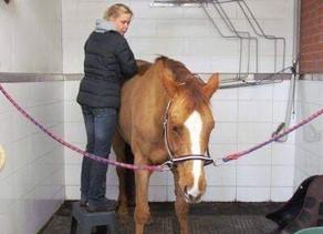Eläinfysioterapia