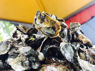 Oysters at Rincón, Puerto Rico