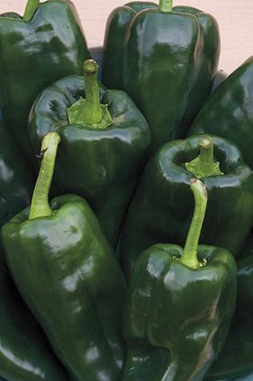 Fresh Pablano Peppers