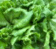GreenLeaf Lettus.jpg