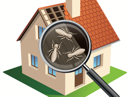 Worried about termites in Phoenix? You should be!