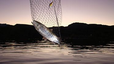 Sport fishing in Chile Chico Lake General Carrera