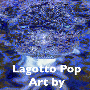 Lagotto Romagnolo POP ART