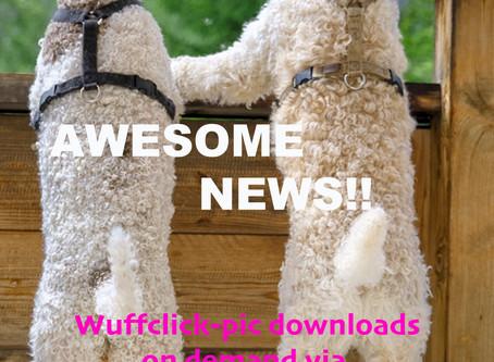 More Wuffclick-pic service