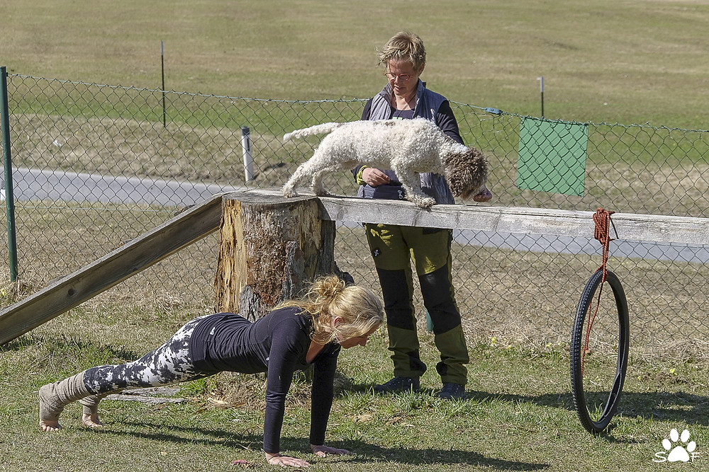 Hundeschule Tirol - THE PLACE for doggie yoga in healthy, Alpine setting