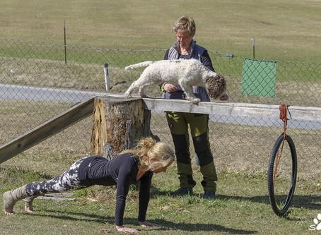 Best of Alpine doggie yoga