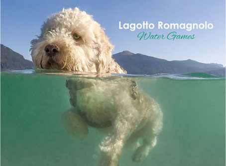 Lagotto Romagnolo Calendars // Wuff(woof)click-pic US editions