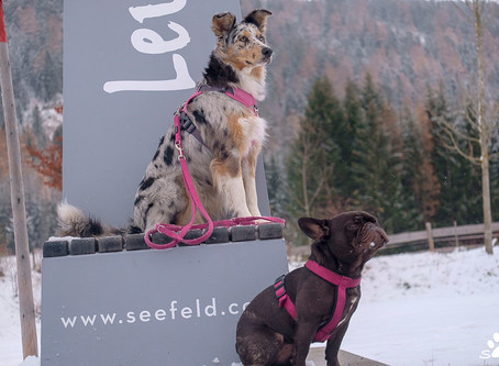 New leash policy in Leutasch....here we come! Or....is it really us, who need training?