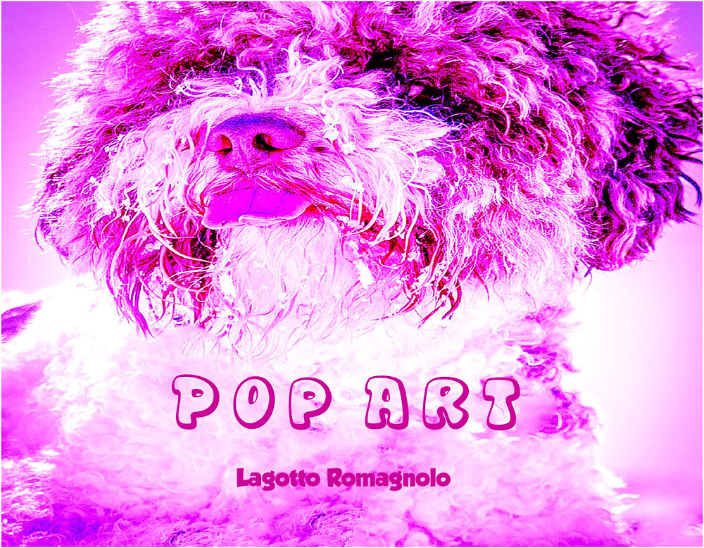 Lagotto Pop Art is our prototype of colorful interpretation of a breed that is gold standard. Pimp up you life and put some woof color on your wall.