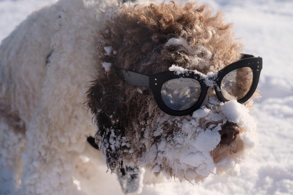 Posh to go on snow