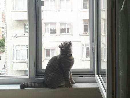 Kediler ve köpekler için hangi sineklik sistemi kullanmalıyız
