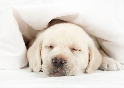 sleeping and fibromyalgia.jpg