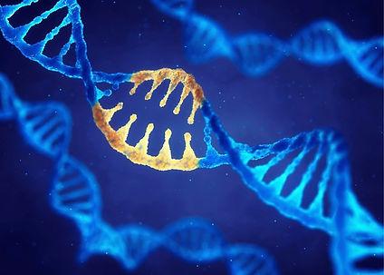 genetics and fibromyalgia.jpg