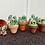 Thumbnail: Rock Cactus Garden