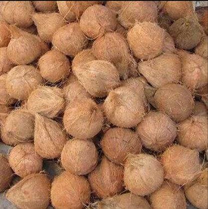 Fresh Matured Nuts