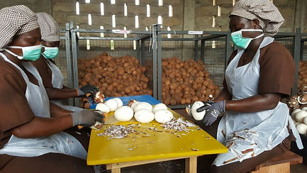 Coconut oil Production in Ghana