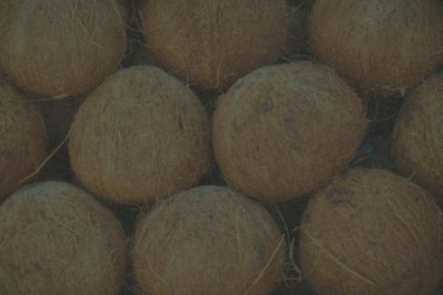 coconut_edited.jpg