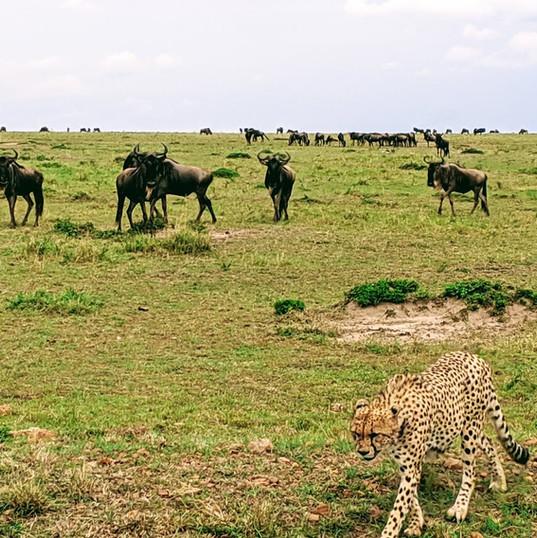 Biodiversity of Wildlife