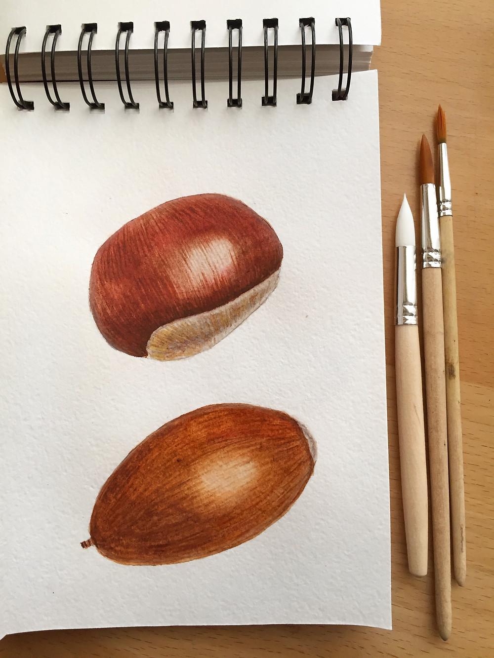 Watercolor chestnuts