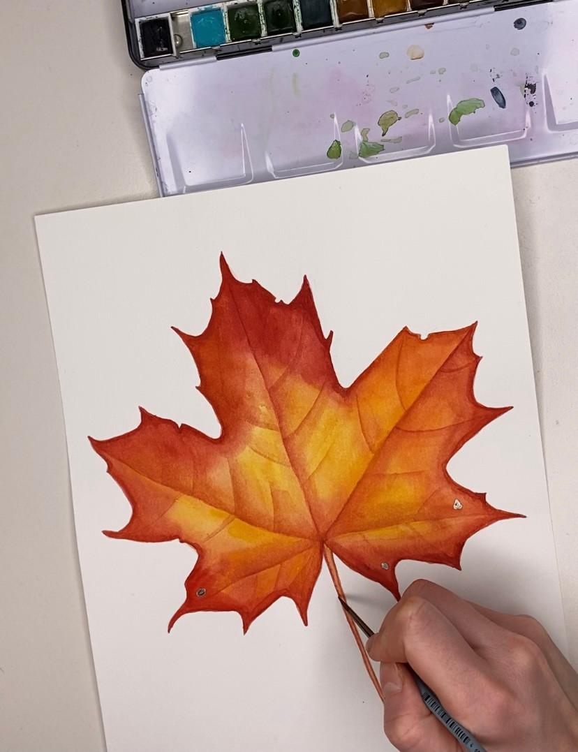 Maple leaf stem detail