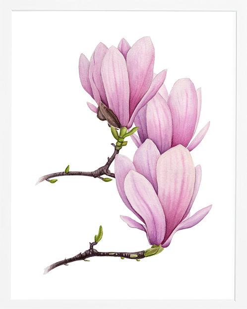 Tender Magnolia