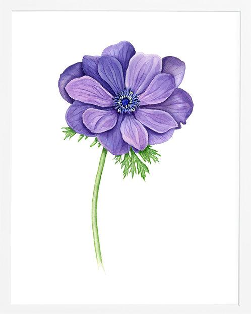 Purple Anemon
