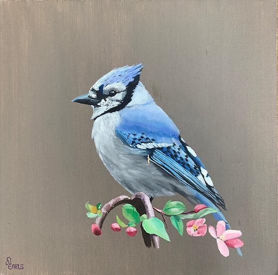 Blue Jay by Joshua Earls