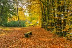Carpet of golden leaves