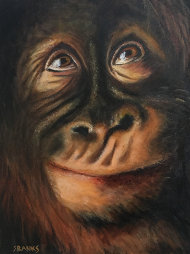 Young Orangutan In Thought