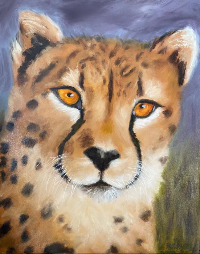 Surveying Cheetah
