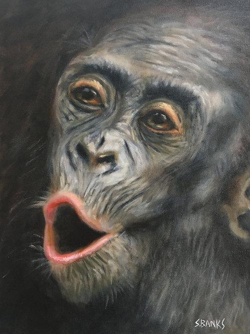 Chimpanzee Greeting