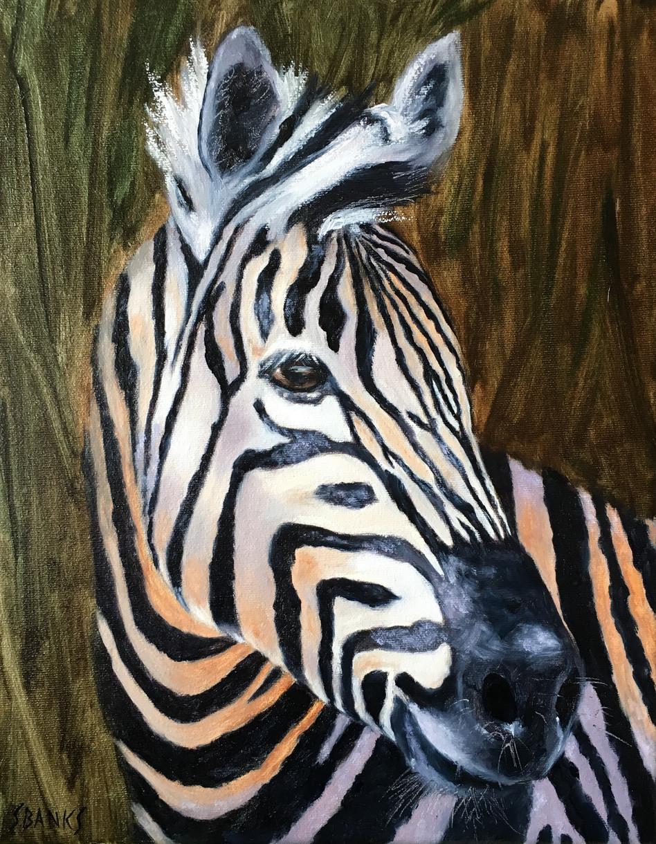 Zebra of the Savanna