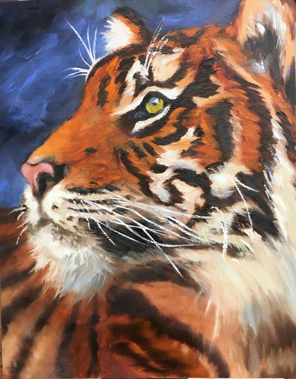 Nobel Tiger