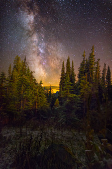 Milky Way and Evergreens at Mt. Rainie