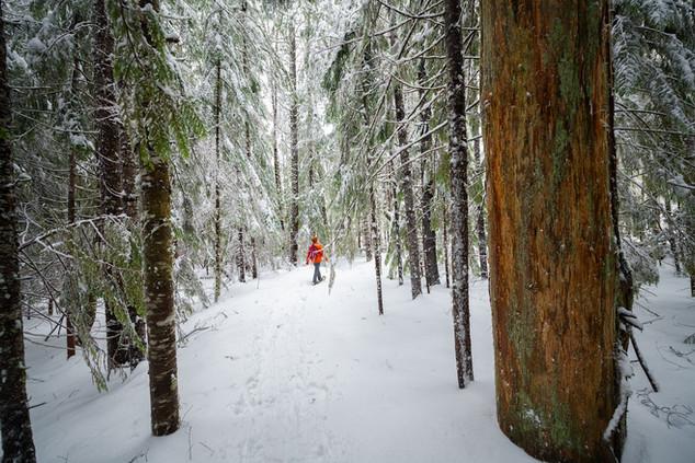 Snowshoeing at Mt. Rainier